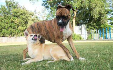 Köpek Irkları