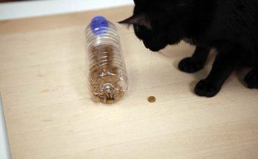 Pet Şişeden Kedi Besleme Oyuncağı