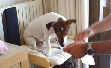 Bebek Büyütürken Köpek Bakımı Konusunda Öneriler (2. Bölüm)