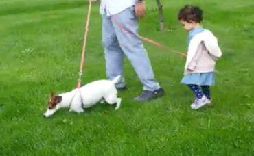 Bebek Büyütürken Köpek Bakımı Konusunda Öneriler (1.Bölüm)