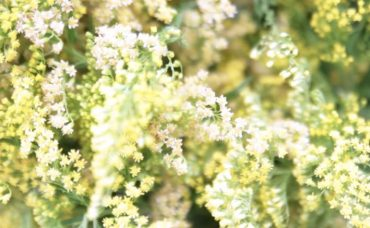 Çiçek Tasarım Trendleri Nelerdir?