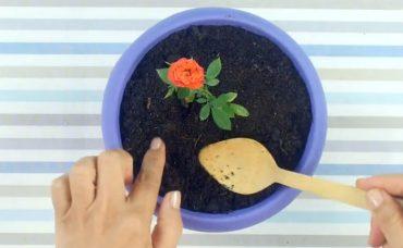 Çiçekleri Sinek Ve Böceklerden Korumanın Yolu 2