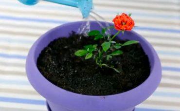 Çiçeklerin Canlı Ve Hızlı Büyümesi Nasıl Sağlanır?