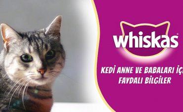 Kediniz İçin Faydalı Beslenme Çözümleri Whiskas'tan!
