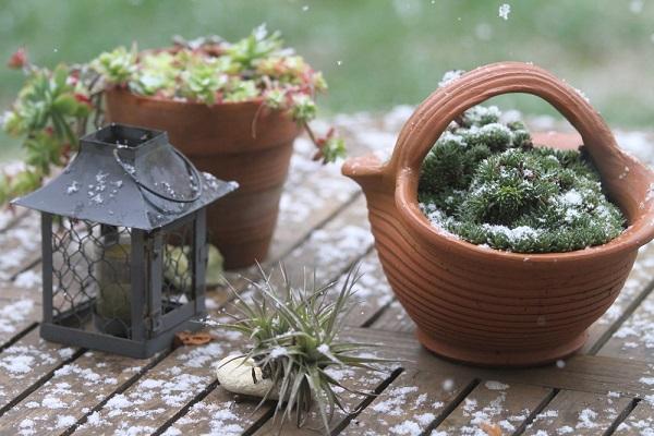 sebze-suyu-ile-bitki-bakimi