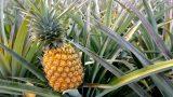 Sebze ve Meyvenin En İyisini Seçme Rehberi