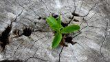Öldürmeyen Acı Güçlendirir: Zor Günlere #iyigelecek 8 Çarpıcı Söz!