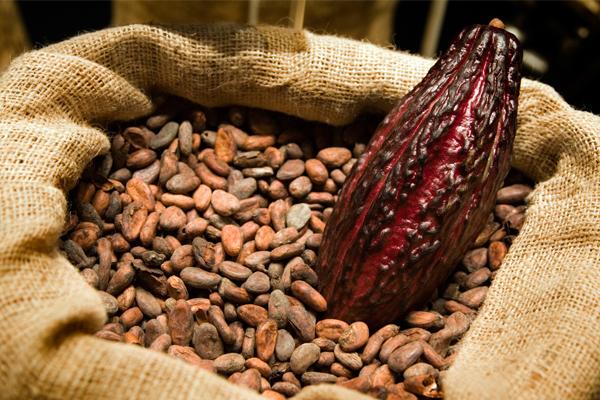 çikolata hakkında ilginç bilgiler 4