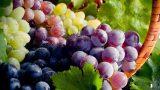 Sonbaharın Eşsiz Meyvesi Üzüm Hakkında 8 İlginç Bilgi