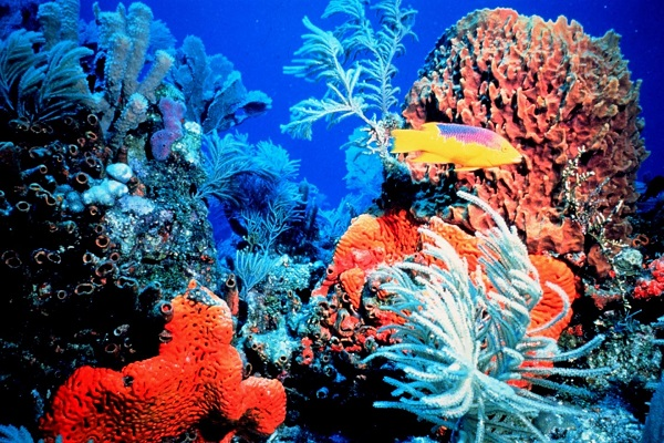 bahama_adaları
