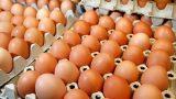 Yumurta Pişirme Sanatı!