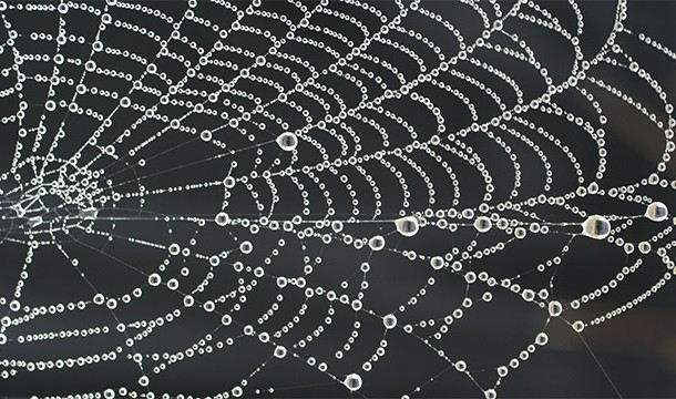 örümcek_ağı