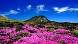 Tablo Değil Gerçek: Yeryüzünün En Güzel Bahar Çiçekleri!
