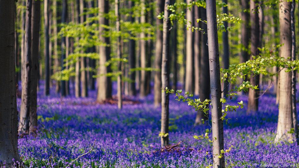 Halle-Forest-Belçika