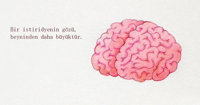 istiridye