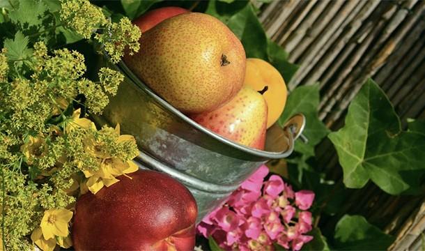 meyve_hasadı