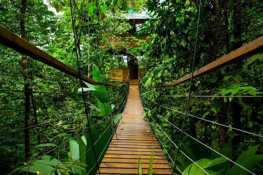 ağaç_köprü