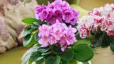 Yeşilleniyoruz : Evde Bakımı Kolay Çiçekler