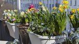 Ev Bahçecilerine Müjde: Bu Sebzeleri Evinizde de Yetiştirebilirsiniz!