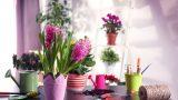 Bitkileri Canlandırmak İçin 5 Yöntem