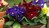 İnsan Hayret Ediyor: Evinizin Havasını Değiştiren Mucize Bitkiler