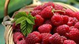 Lezzetli ve Sağlıklı: Şeker Oranı En Düşük Meyveler