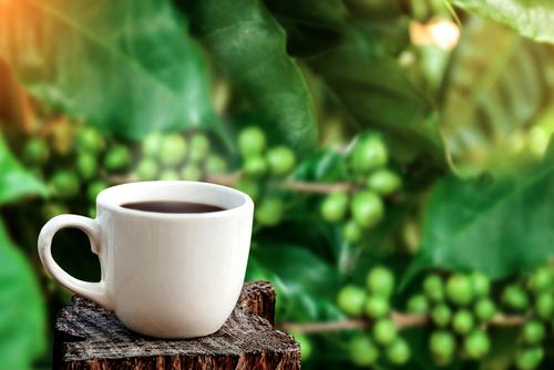 yesil-kahve3