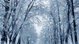 Kış Temalı 6 Güzel Şarkı