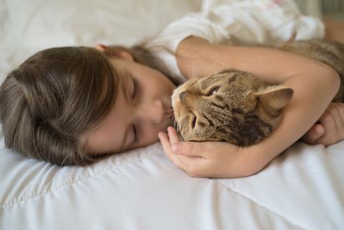 kedi-sevgisi