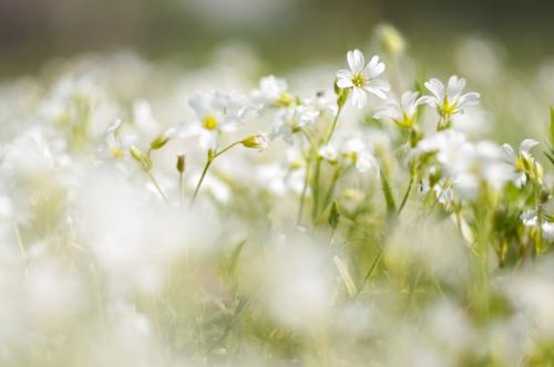 bahar-alerjisi2