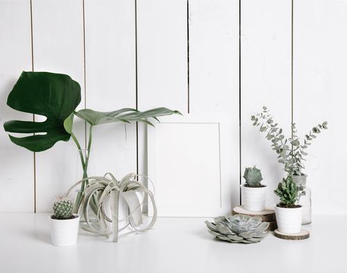 kaktus-bitkisi