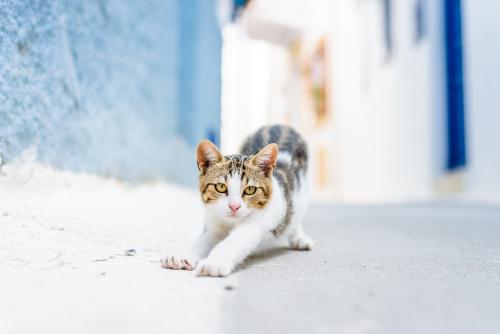 sokak-kedileri