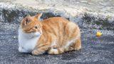 Kedi Sahiplenmeye Karar Verdiyseniz İşte Size 6 Tavsiye