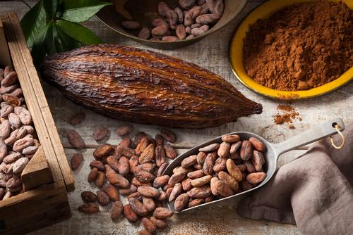 kakao-kullanimi