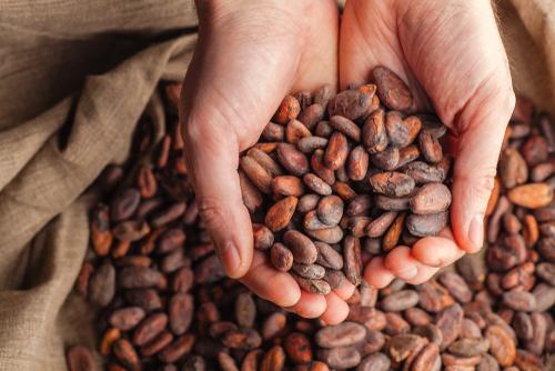 kakao-sagliga-faydalari