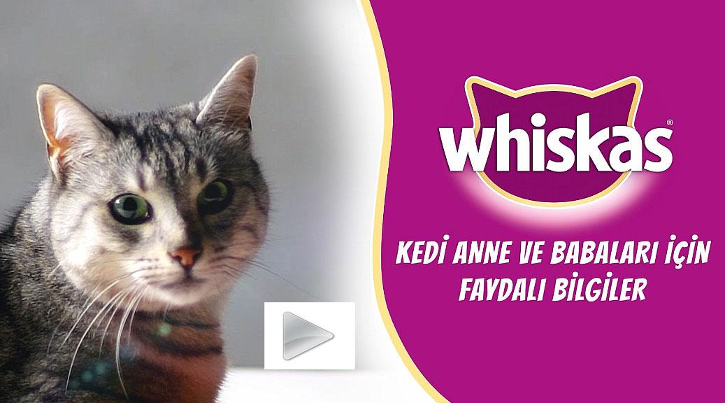 whiskas-kedi-beslenmesi