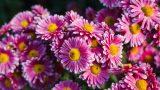 Evin Havasını Temizleyen 5 Bitki
